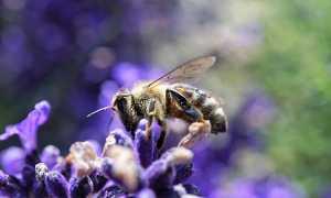 ape fiore polline biodiversità