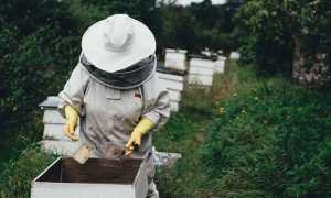 api apicoltore miele