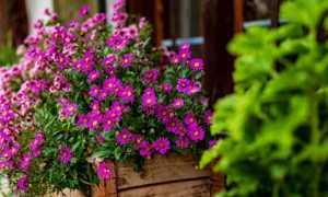 fiori foto modificato 2
