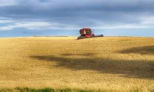 trattore grano mietitura